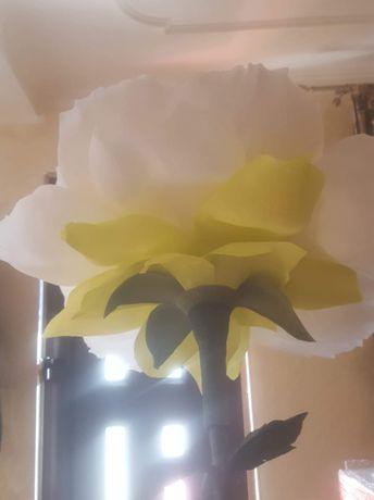 flori gigant