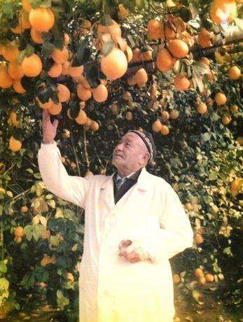 Саженцы ташкентского лимона