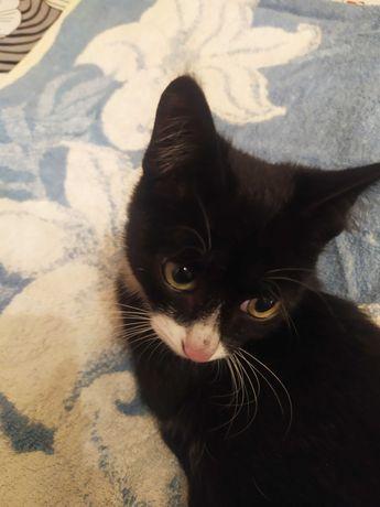 Маленький котик ищет дом