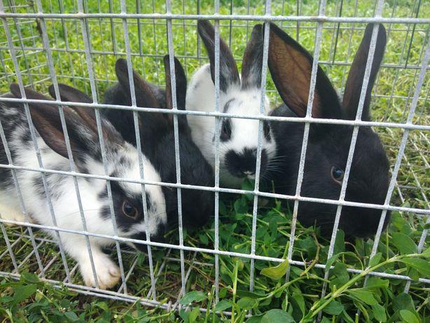 Продам кроликов 2000₸