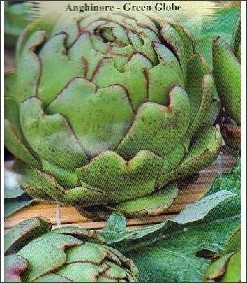 Seminte de Anghinare Green Globe - plic 1gram