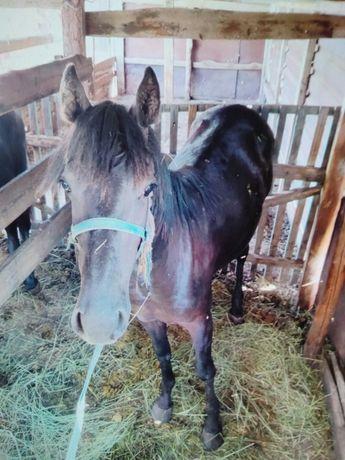 Продам 2х лошадей