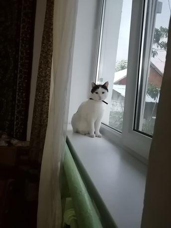 Отдам кошку в хорошие руки в частный дом