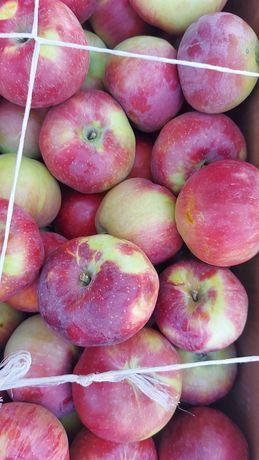 Ягоды яблоки , персики, шиповник, барбарис, облепиха, виноград,