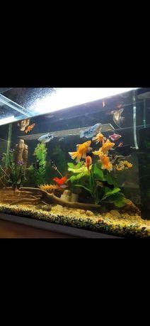 Аквариумы с рыбами разных размеров