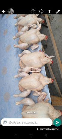 Продам домашних куриц бройлеры куры курица тауык