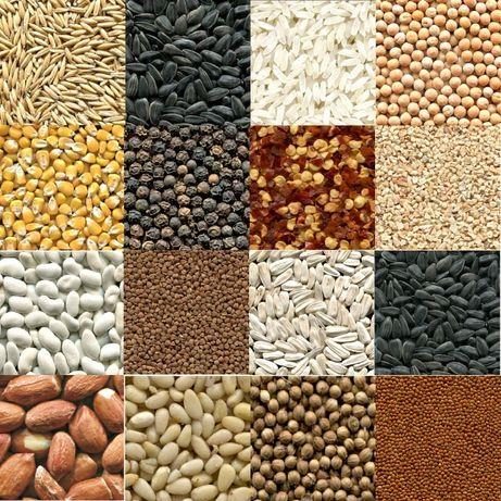Почистване на насипни продукти, пшеница, нахут, боб, леща, орехи,