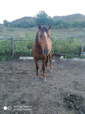 Рабочая лошадь 9 лет