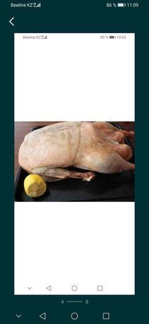 Мясо утки диетические