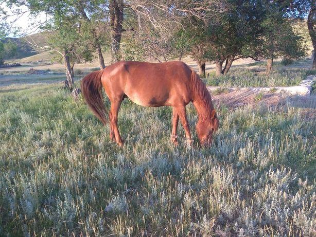 Продам лошадь на согым