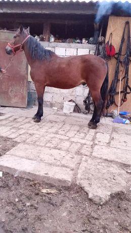 Vând cal garantat