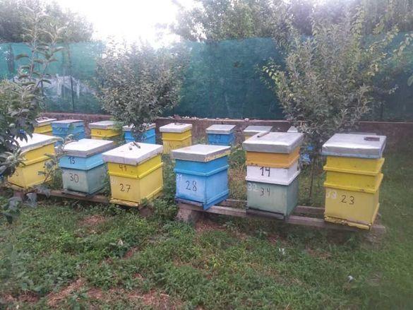 Пчелни  Отводки .