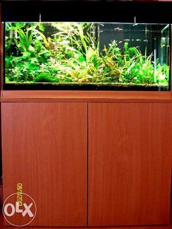 Поддръжка на сладководни аквариуми
