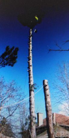Почистване на парцели дворове косене на трева рязане на опасни дървета