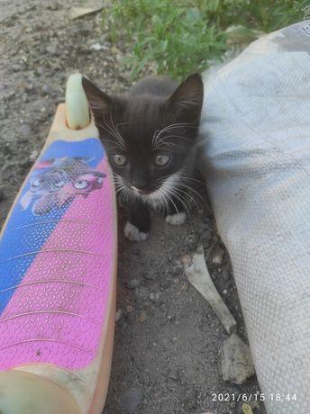 Симпатичные котята ищут дом