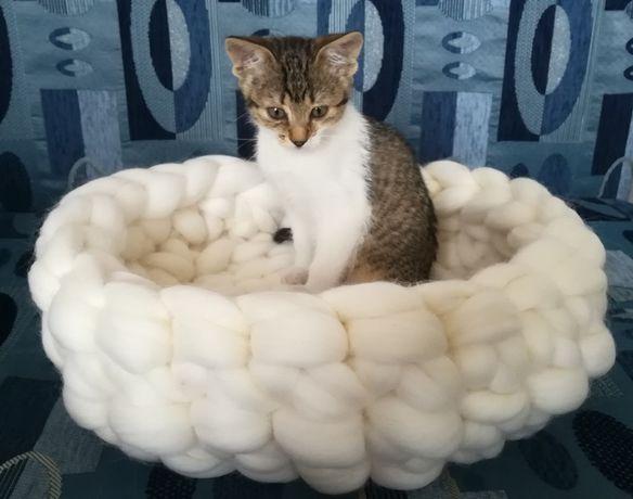 Кош, панер за куче/котка от 100 % мериносова вълна - 35 лв