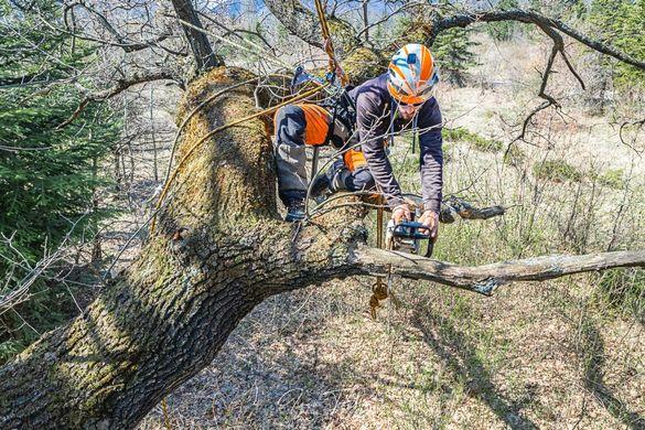 Рязане на дървета - кастрене и премахване