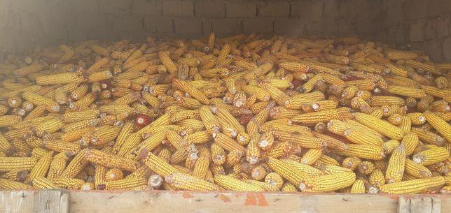 Жугери бар кургак 2 тонна 80 тенгеден