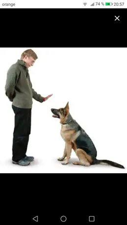 Dresaj canin + pensiune