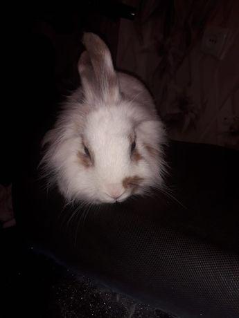 Продам дикоротивного кролика