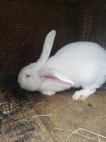 Продам кроликов +-