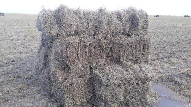 Продам сено в тюках. 300 тенге