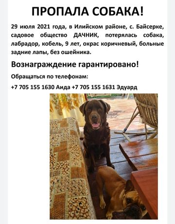 Пропала собака в Байсерке