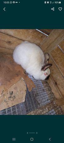 Продам кроликов.