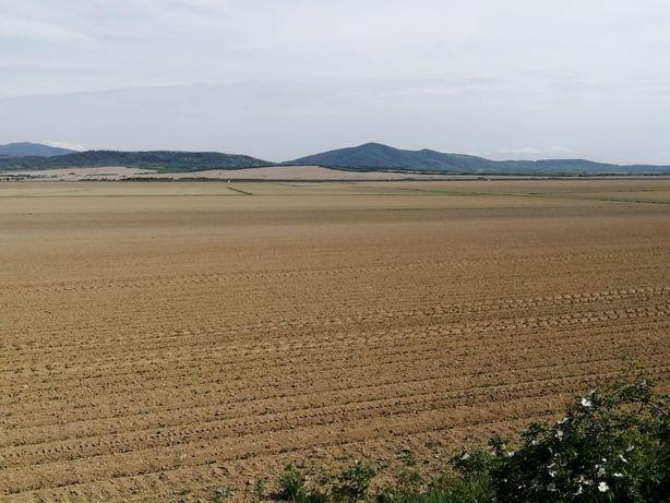 PF dau in ARENDA/ chirie teren agricol in Borsa, Jud. Cluj