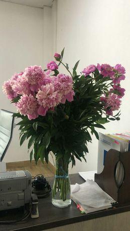 Продам корни цветов пионов делёнки с весны рассады пророщенные  .