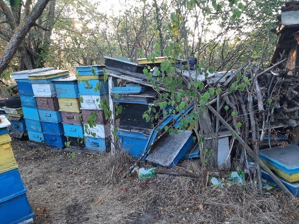 Ликвидация пчелин