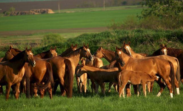 Обменяю Лошадей на 1ком кв