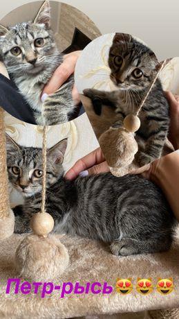 Помогите котенку обрести семью