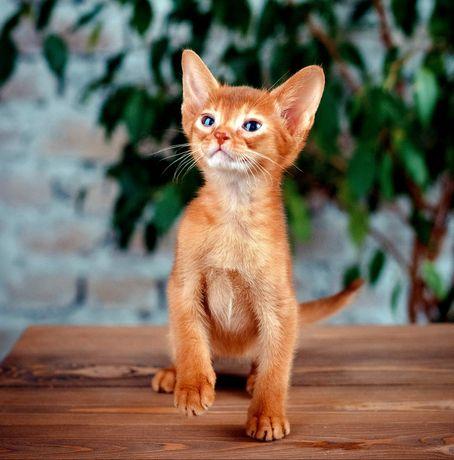 Котенок очень красивого окраса