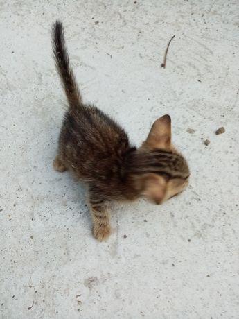 Gratuit pisicuti, vârsta o luna jumate