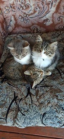 Котята хорошие упитанные
