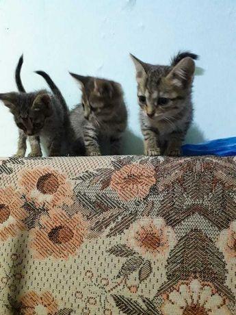 Милые девочки котята