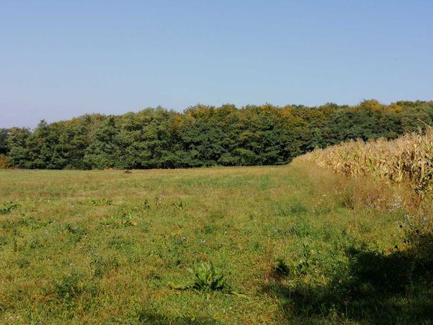 Teren lângă pădure