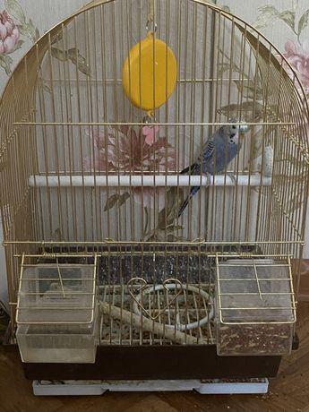 Папугай с сеткой