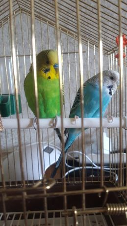 Попугаи попугай