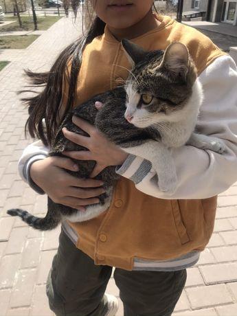 Нашелся кот! Ищем хозяина кота
