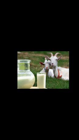 козье молоко кефир курт