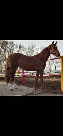 Продам лошадь кобылку