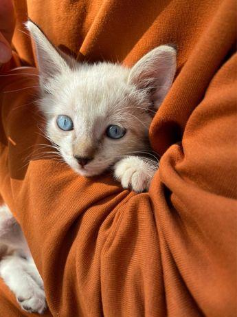 Котик в добрые руки