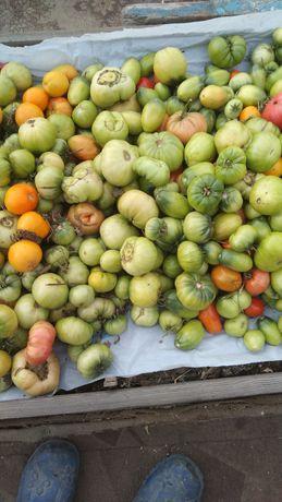 Продам зеленые помидоры