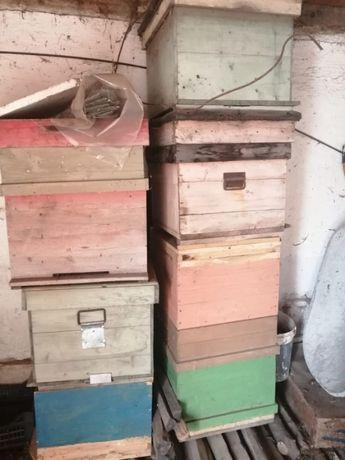 lasi de albine pe 10, 11, rame