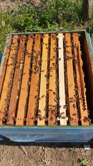 Familii albine cu tot cu stup