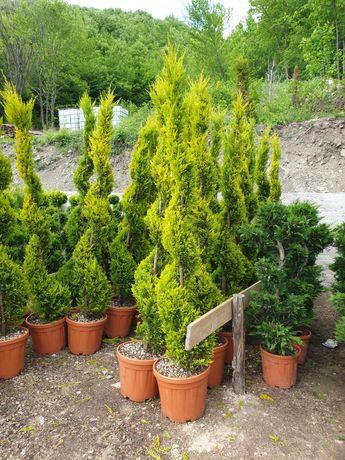 Plante ornamentale (Specialități)