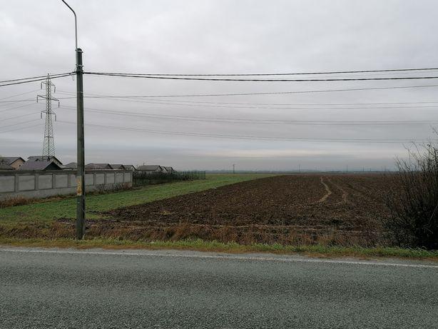 Teren intravilan stradal 910mp/1060 mp - Albesti, Simnicu de Sus, Dolj