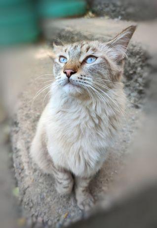Шикарный кот бесплатно